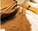 Био Пшеница насипна 100 гр